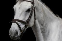 """Horse photoshoot"" / Photographer - Jasper Legrand"