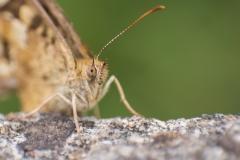 """Macro Butterfly"" / Photographer - Jasper Legrand"
