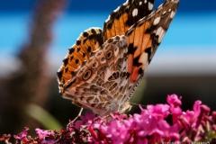 """""""Butterfly"""" / Photographer - Jasper Legrand"""